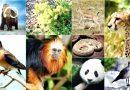 Conceptos básicos sobre problemática medioambiental.