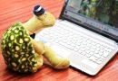 Junto a la tortuga, programamos nuestros dibujos.