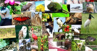 Consumo sustentable y preservación del medio ambiente: estudiamos la biósfera.