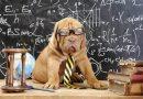 ¿Una mascota inteligente? Repasamos las letras, los números y los colores.